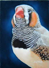 Zebra Finch by Tonkinson