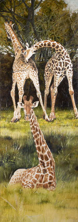Three baby giraffe by tonkinson