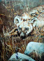 hyena at dawn by tonkinson-art web