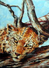 lazy leopard in a tree 81