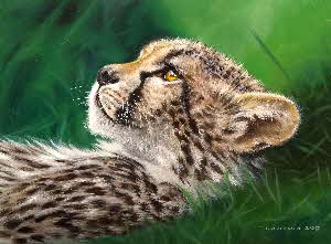 baby cheetah by Tonkinson